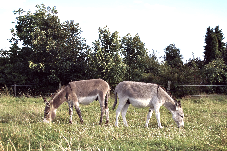Welch wunderbare Wesen – unsere Esel