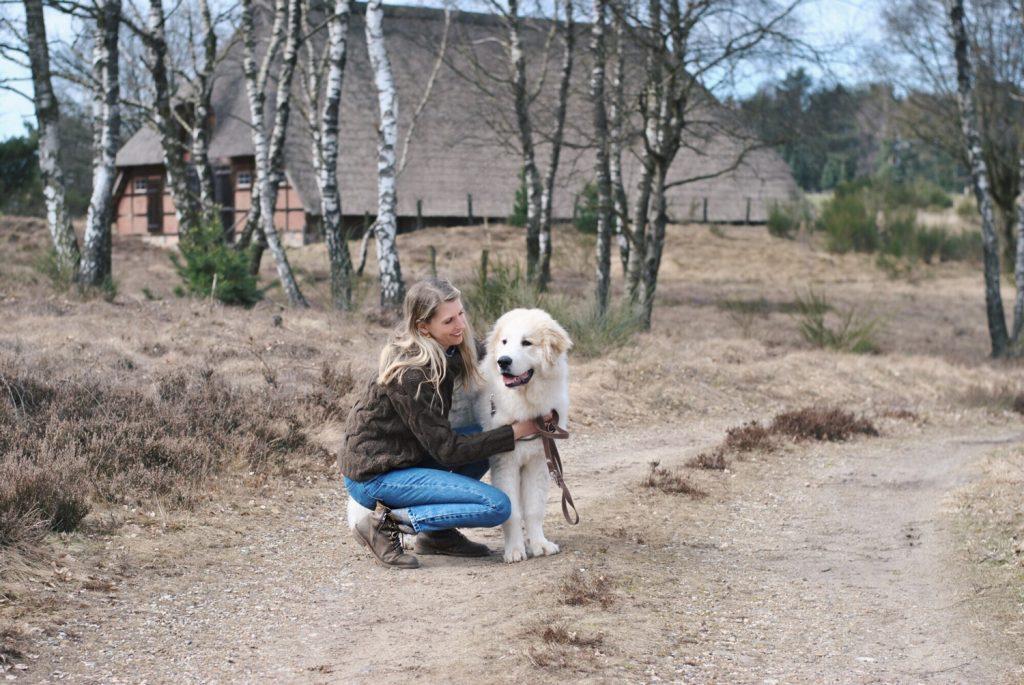 Herdenschutzhund in der Heide