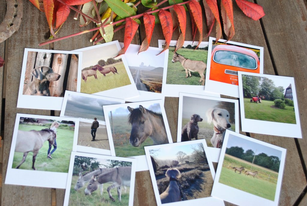 Wildlings Blog Impressionen